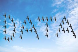 Migrating Data Birds
